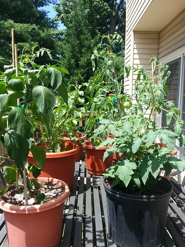 deck garden 7-4