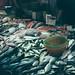 一堆魚,一堆生命 by veeen8