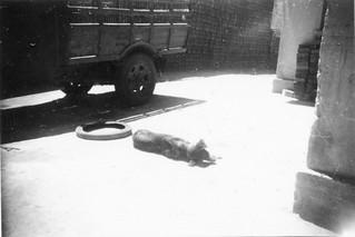Le camion Ford, dans une rue de Casablanca