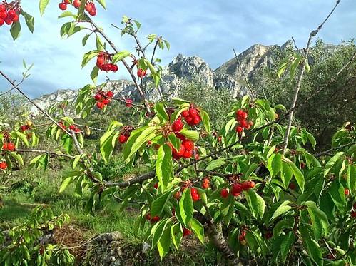 las cerezas del Valle