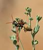 Wasp by kaeagles