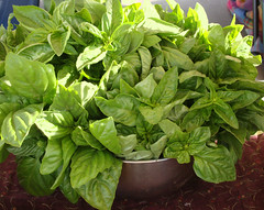 flower(0.0), malabar spinach(0.0), annual plant(1.0), vegetable(1.0), komatsuna(1.0), plant(1.0), leaf vegetable(1.0), herb(1.0), produce(1.0), food(1.0), basil(1.0),