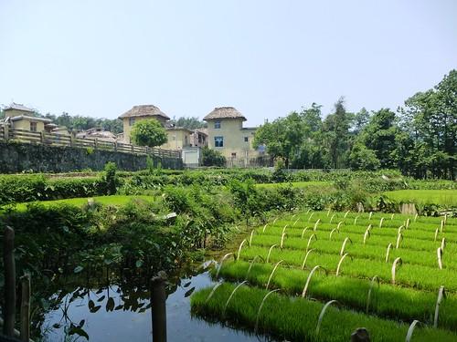 Yunnan13-Yuanyang 15-Dayutang (14)