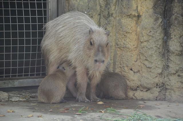 夏の青春18きっぷの旅 市川市動植物園&千葉市動物公園