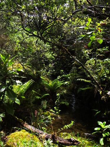 A native forest view within one of the small gulches of TNC's Waikamoi Preserve.