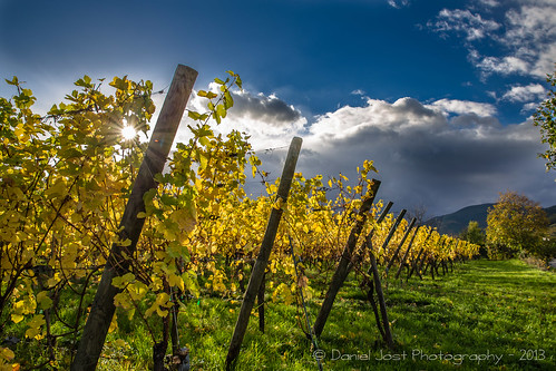 alsace vin vignes vignoble ruby3 ammerschwihr 2013 canoneos6d mygearandme mygearandmepremium mygearandmebronze tamron2470mmf28divcusd