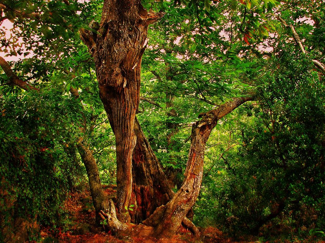 6. Misterio en el bosque gallego. Autor, Fondebre