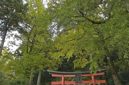 【写真】2013 紅葉 : 岩戸落葉神社/2020-11-23/IMGP3034