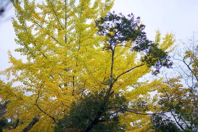 椿谷の紅葉 1