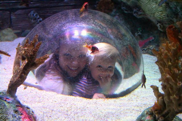 sea life aquarium kansas city. Black Bedroom Furniture Sets. Home Design Ideas