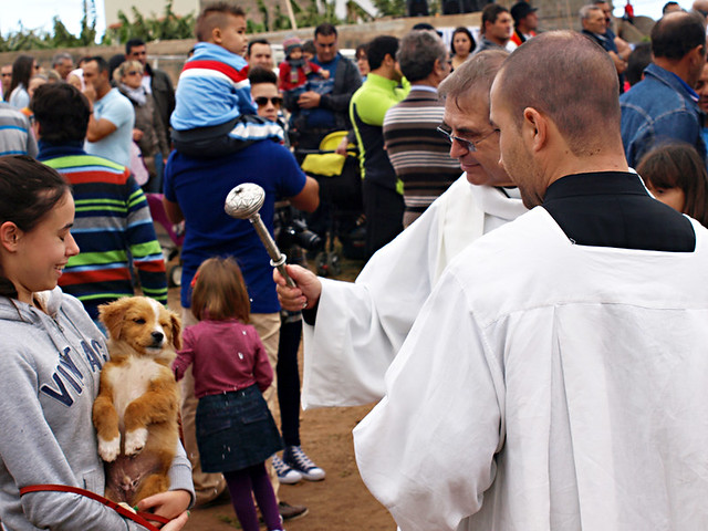 Priest blesses puppy at San Abad, Buenavista del Norte, Tenerife