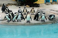 Mass of Penguins