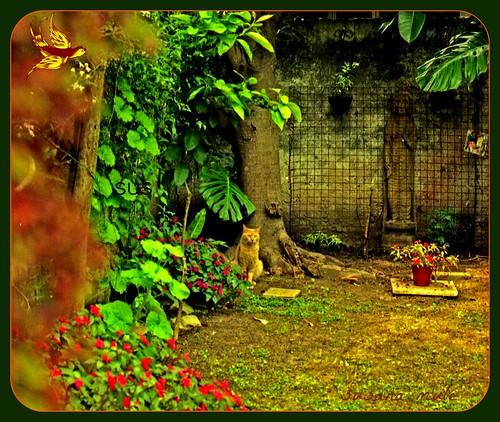 gato en jardín.1