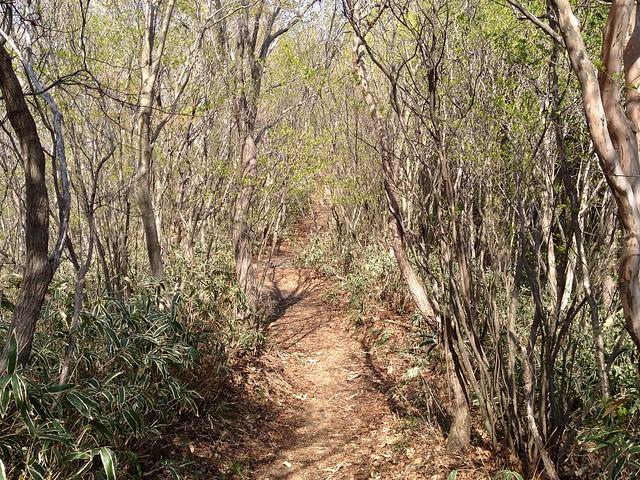 瓢ヶ岳 奥瓢岳への尾根道