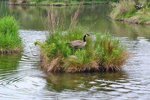 Reifel Migratory Bird Sanctuary ~Explore May 10th, 2014~