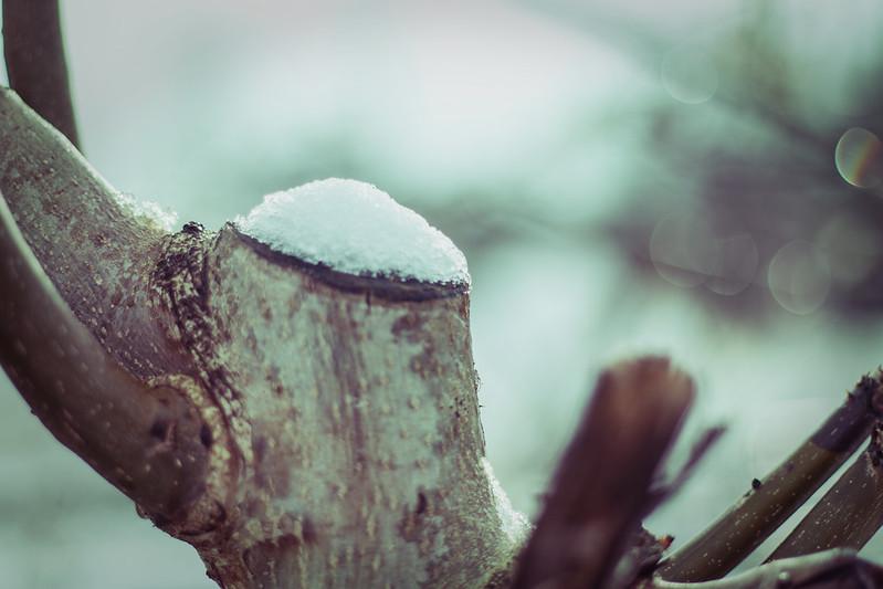 snowblanket