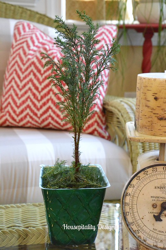 Dried Cedar Tree-Housepitality Designs