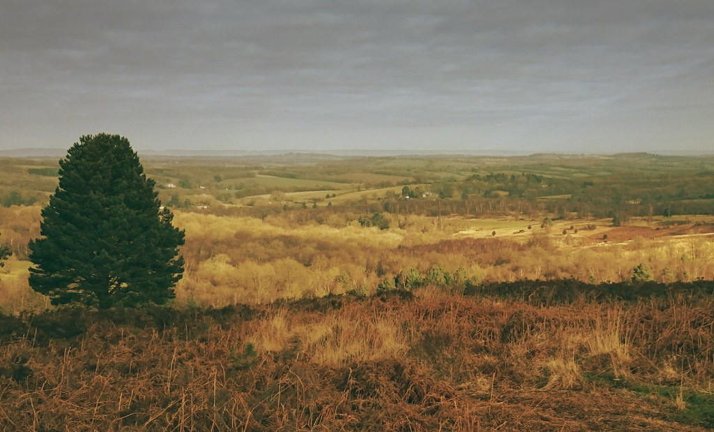 ashdown forest map - east sussex  england