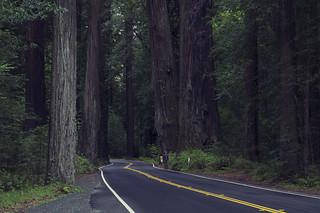 Humboldt Redwoods State  Park, CA | Roland Krinner