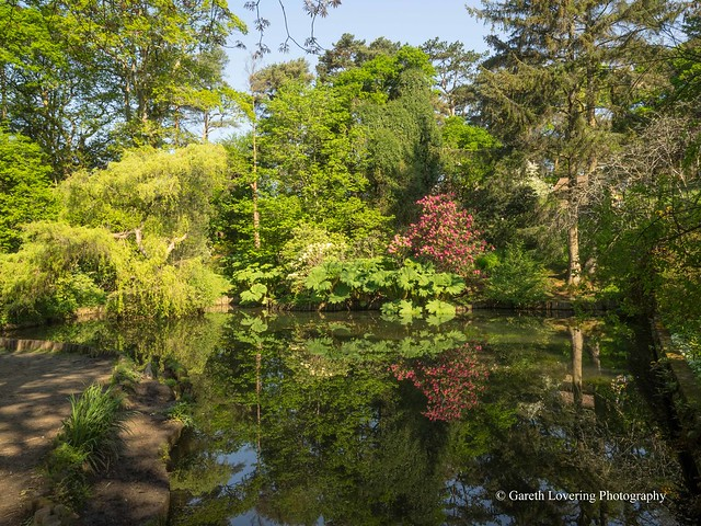 Clyne Gardens 2016 05 13 #19