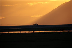 sunset on amboseli