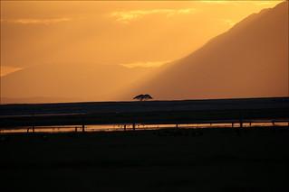 sunset on amboseli