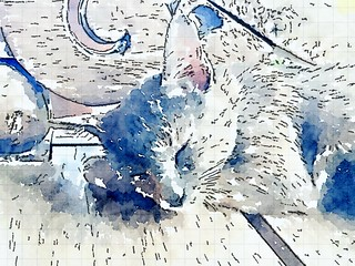 20160227_5974-waterlogue-cat copy