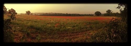 field sunrise shropshire poppy quatt uploaded:by=flickrmobile flickriosapp:filter=salamander salamanderfilter