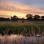 Loddon Sunset
