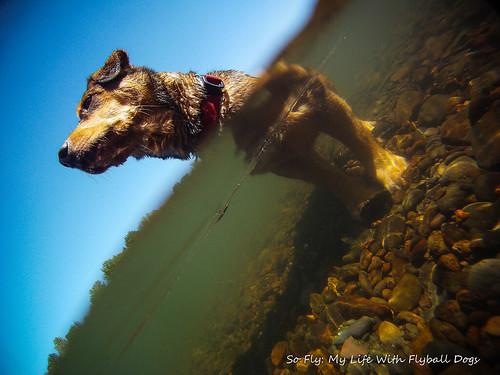GoPro Under Water-5888