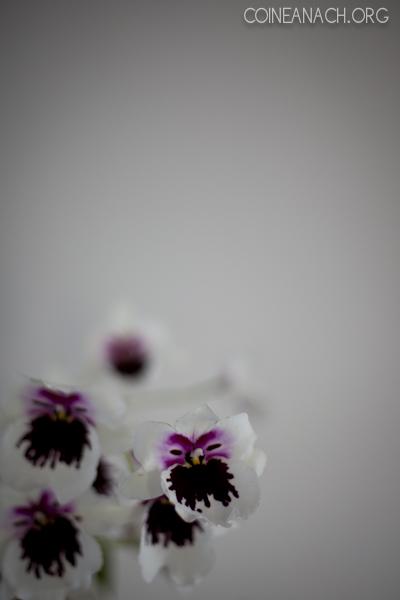 orchidaceae-001