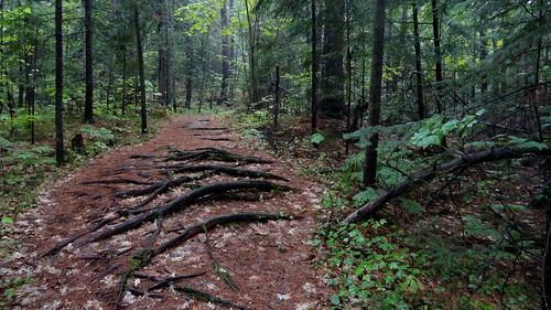 ontario canada forest killarney