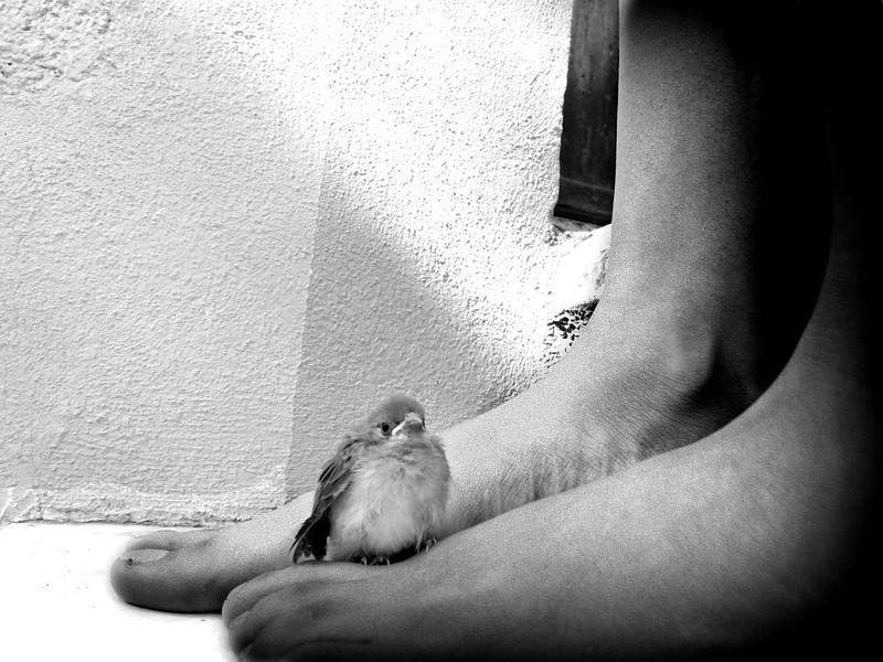 Entre mis pies