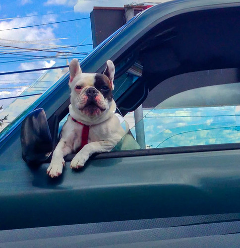 dog animal truck iphone5