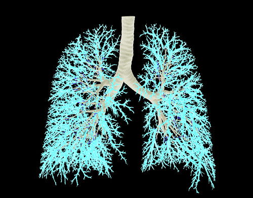 Computational Models of Partical Deposition in the Lung