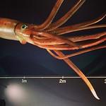 深海特別展。オモロイ。