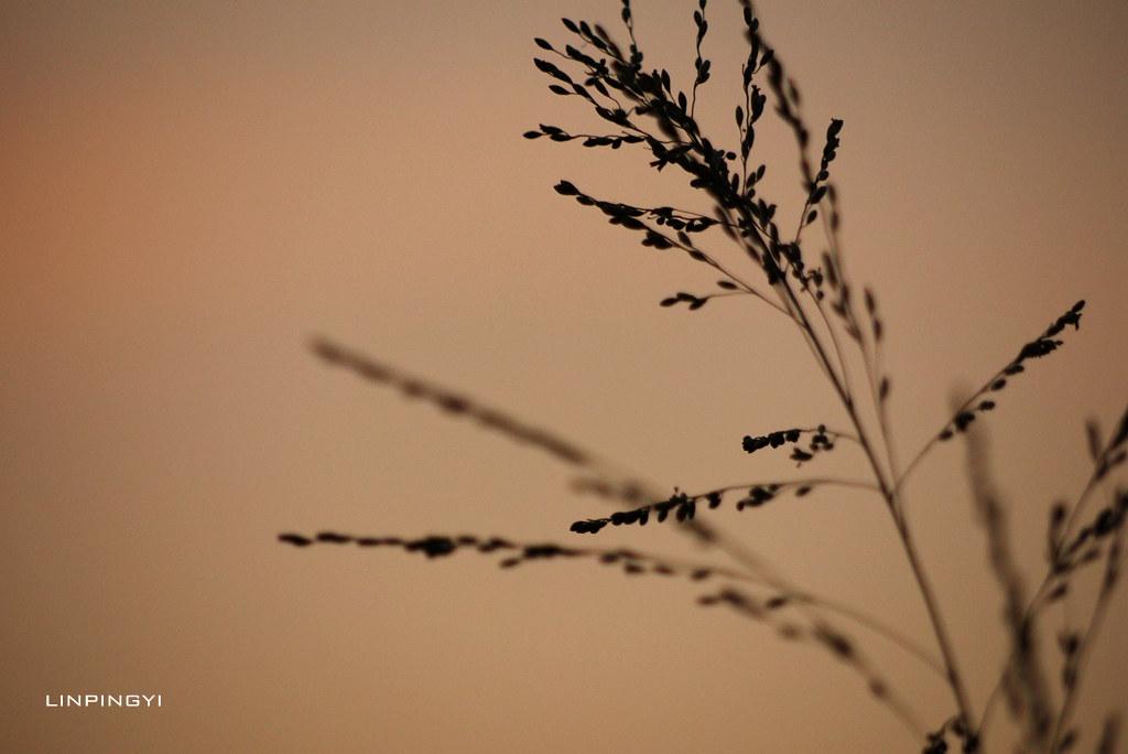 秋天來了。空靈@GF-2