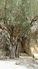 Kreta 2013 031