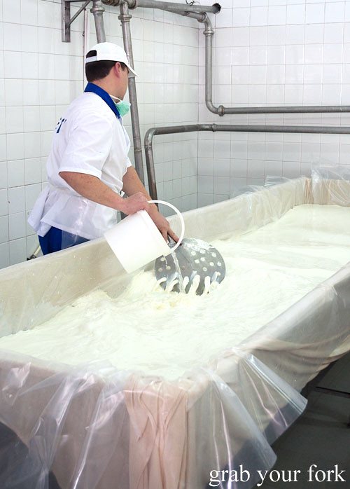 rennet stirring milk at dairy factory, dalbok izvor, bulgaria