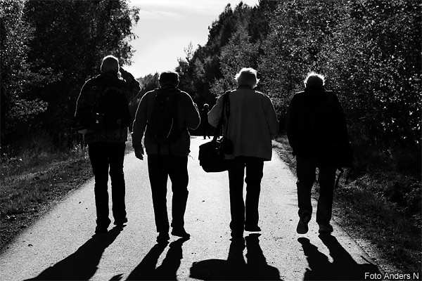 the mild bunch, wild, det milda gänget, vilda, fyra gubbar i motljus, four old men in backlight, tsyfpl, foto anders n, Göteborgs fotoklubb