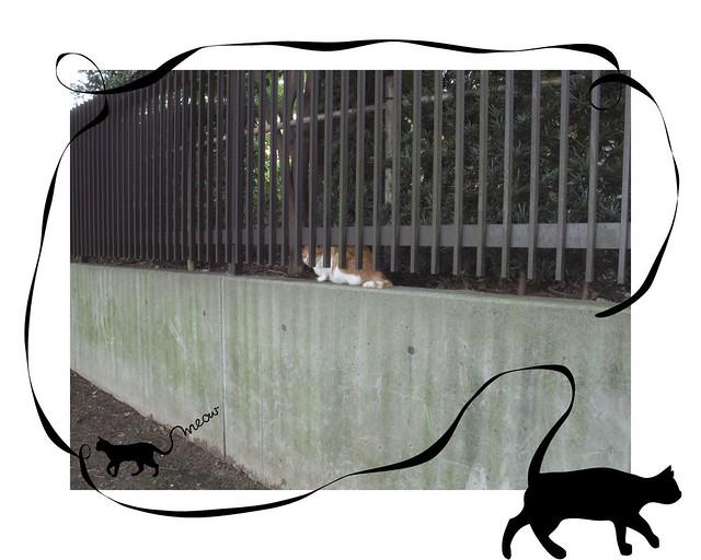 『catzElysium〜駒沢公園辺りの猫』の画像