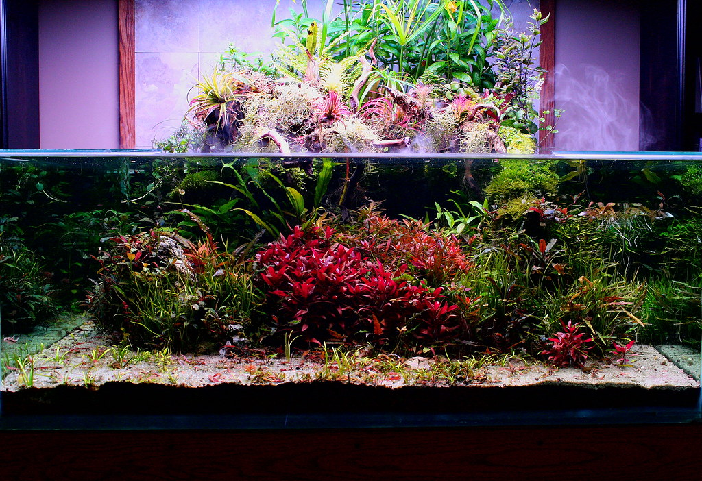 View topic 200g shallow square by don - Begonia argentata ...