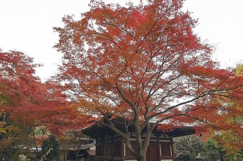 【写真】2013 紅葉 : 白沙村荘/2020-12-28/IMGP3715