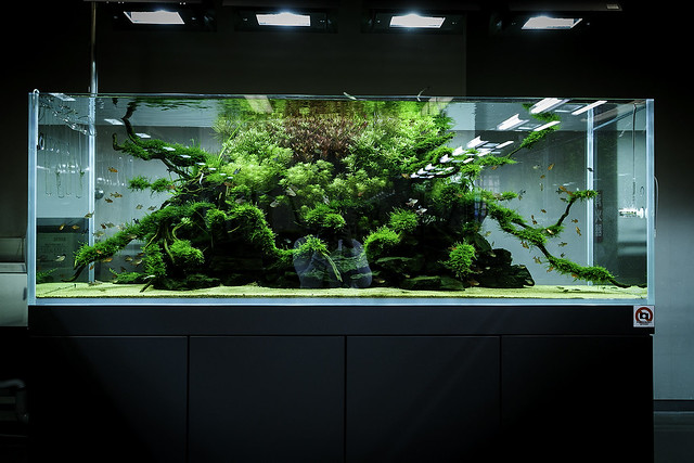 Ada Nature Aquarium Gallery Flickr Photo Sharing