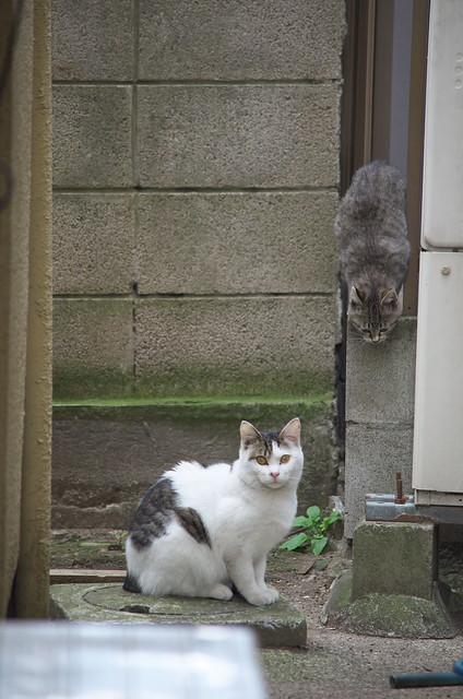 東京路地裏散歩 荒川のネコ 2014年1月4日