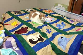 Cosmo enjoying Blue's Clues quilt