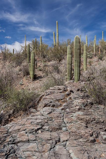 King Canyon, Saguaro National Park