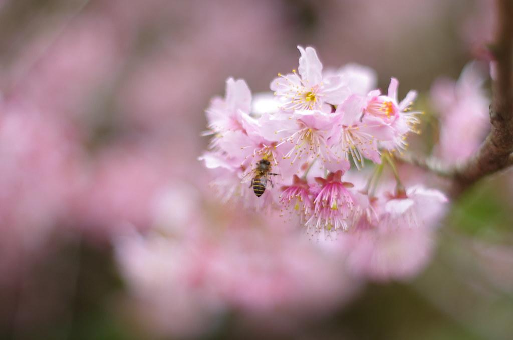 春暖花開-小半天-杉林溪