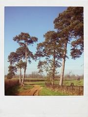 harcourt arboretum...