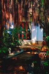 A Thai Asaram Hidden Behind Gogen Fig Tree Shades